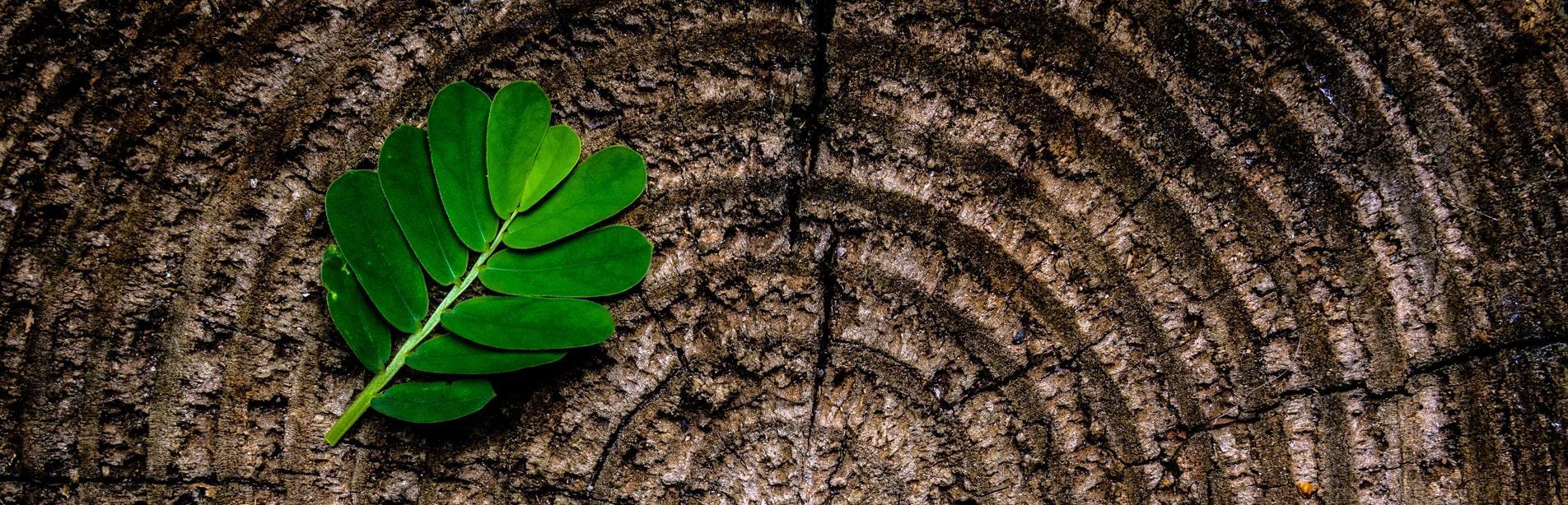 abstract art brown banner